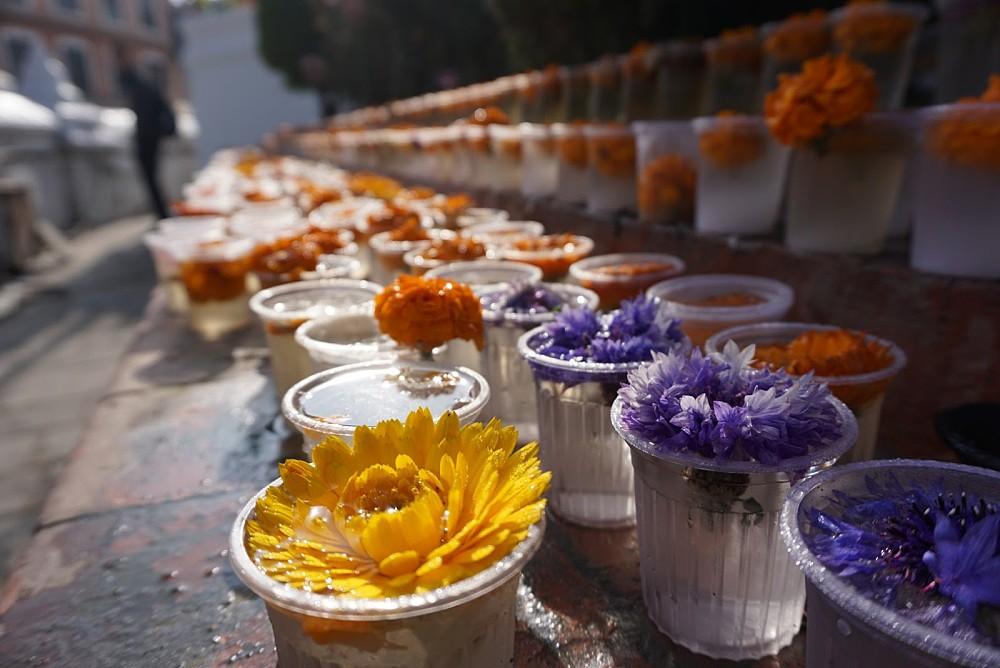 Nepal flowers